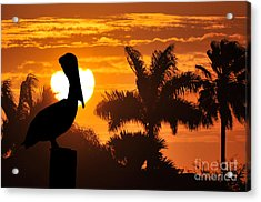 Pelican At Sunset Acrylic Print by Dan Friend