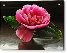Pink Camellia Acrylic Print by Terence Davis
