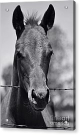 Pretty Girl Acrylic Print by Juls Adams