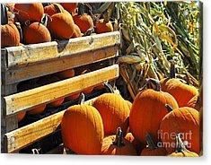 Pumpkins Acrylic Print by Elena Elisseeva