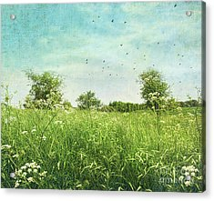 Queen Anne's Lace Wildflowers Acrylic Print by Sandra Cunningham
