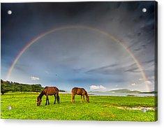Rainbow Horses Acrylic Print by Evgeni Dinev