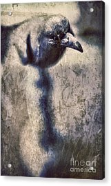 Raven Acrylic Print by HD Connelly