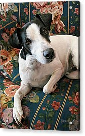 Ready To Go Acrylic Print by Kelley Gruver