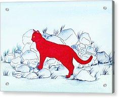 Red Cat Acrylic Print by Michaela Bautz