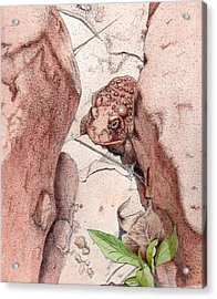 Red Spotted Toad Acrylic Print by Inger Hutton