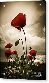 Red Weed Acrylic Print by Martin Dzurjanik