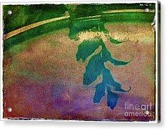 Reflection Acrylic Print by Judi Bagwell