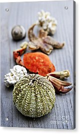Sea Treasures Acrylic Print by Elena Elisseeva