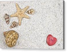 Seastar And Shells Acrylic Print by Joana Kruse