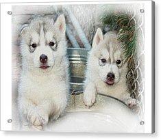 Siberian Husky Puppies Acrylic Print by Jean Gugliuzza