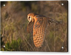 Silent Hunter Acrylic Print by Beth Sargent