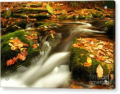 Soothing Acrylic Print by Darren Fisher