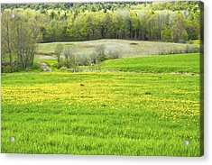 Spring Farm Landscape With Dandelion Bloom In Maine Acrylic Print by Keith Webber Jr