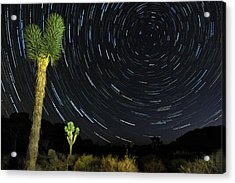 Star Trails In Joshua Tree Acrylic Print by Dung Ma