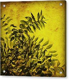 Sun Kissed Acrylic Print by Julie Hamilton