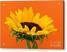Sunflower Closeup Acrylic Print by Elena Elisseeva