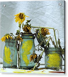 Sunflowers .helianthus Annuus Acrylic Print by Bernard Jaubert