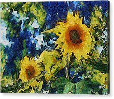 Sunflowers Acrylic Print by Michelle Calkins