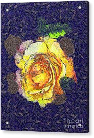 The Rose Acrylic Print by Odon Czintos