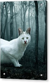 Tonga Acrylic Print by Big Cat Rescue