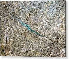 Turquoise Worm Acrylic Print by Robert Knight