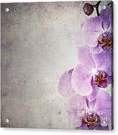 Vintage Orchids Acrylic Print by Jane Rix