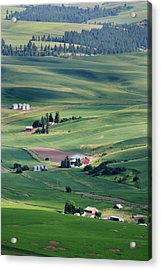 Wheatfields In Rural Washington State Acrylic Print by Carl Purcell