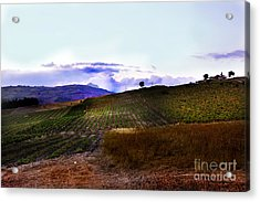 Wine Vineyard In Sicily Acrylic Print by Madeline Ellis
