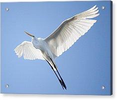 Wings Acrylic Print by Paulette Thomas