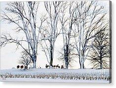 Winter Calm Acrylic Print by Christine Belt