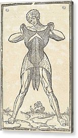 Historical Anatomical Illustration Acrylic Print by Science Source
