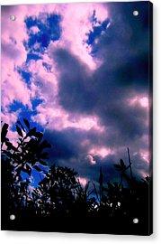 Looking Up  Acrylic Print by Allen n Lehman