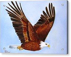 1149b  Bold Eagle 3 Acrylic Print by Wilma Manhardt