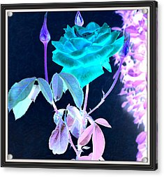 Flowers Flowers And Flowers Acrylic Print by Anand Swaroop Manchiraju