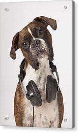 Boxer Dog With Headphones Acrylic Print by LJM Photo