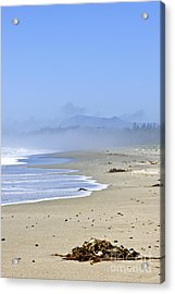 Coast Of Pacific Ocean In Canada Acrylic Print by Elena Elisseeva