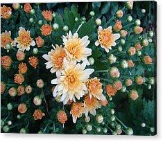 Contemplate The Flower Acrylic Print by Johanna Kohn