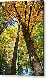 Fall Forest Acrylic Print by Elena Elisseeva