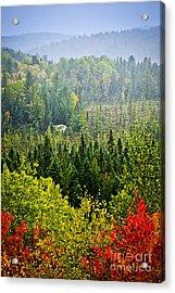 Fall Forest Rain Storm Acrylic Print by Elena Elisseeva