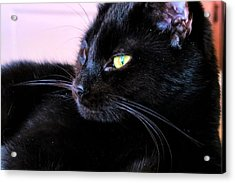 Green Eyes Acrylic Print by Michelle Milano