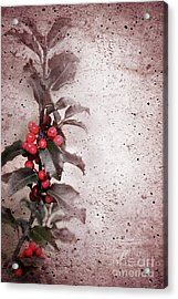 Holly Branch  Acrylic Print by Carlos Caetano