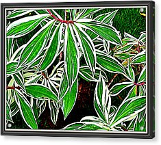 Leaves Acrylic Print by Anand Swaroop Manchiraju