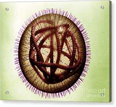 Measles Virus Acrylic Print by Omikron