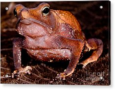 Para Toad Acrylic Print by Dant� Fenolio