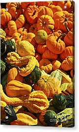 Pumpkins And Gourds Acrylic Print by Elena Elisseeva