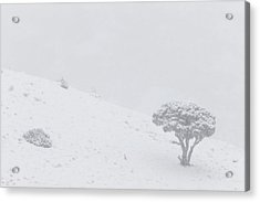 Yellowstone Park Wyoming Winter Snow Acrylic Print by Mark Duffy