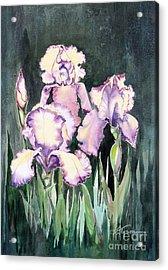 Iris Acrylic Print by Diana  Tyson