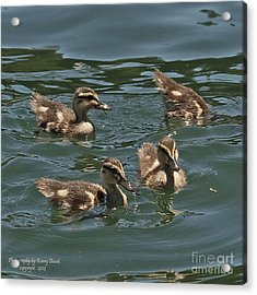 3 Up And 1 Down Acrylic Print by Kenny Bosak