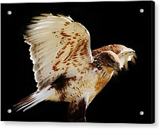 Wings Acrylic Print by Paulette Thomas